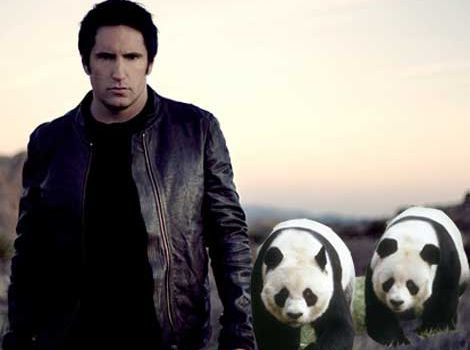 trent and pandas