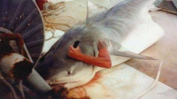 Shark Stabbing WTF