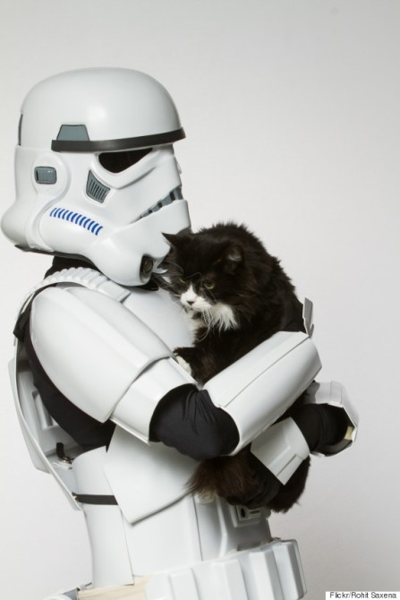 o-STORMTROOPER-CAT-570